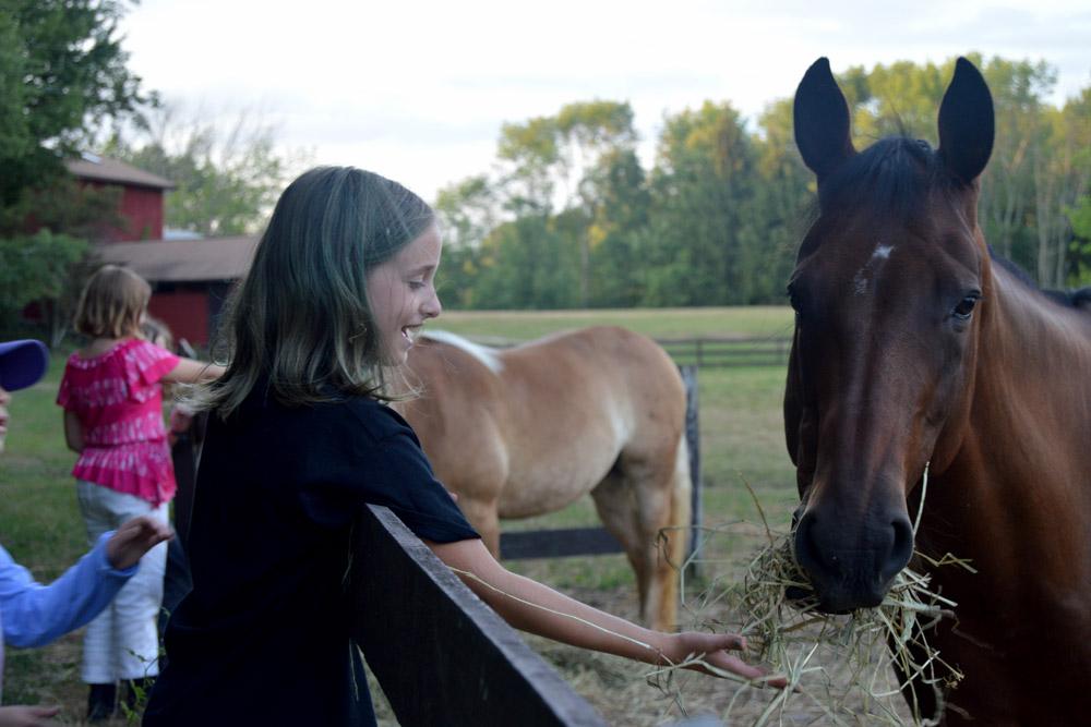 Horses at Ballibay Arts Camp